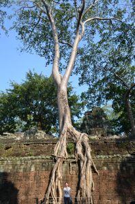 Camboja-250