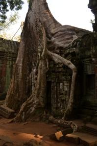 Camboja-260