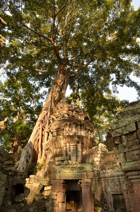 Camboja-267