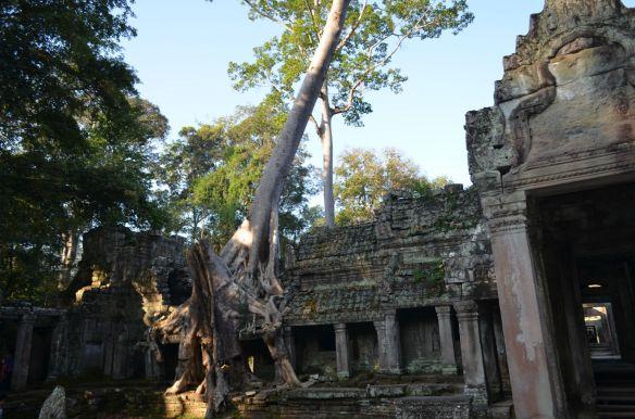 Camboja-549