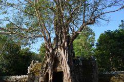 Camboja-597